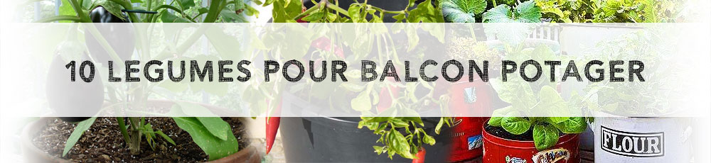 10 legumes pour balcon potager